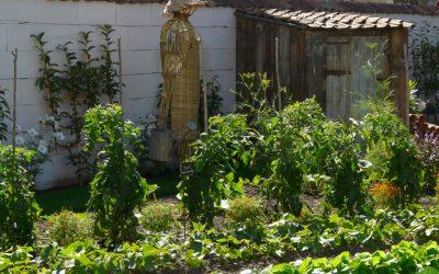 2008 – Jardin & potager