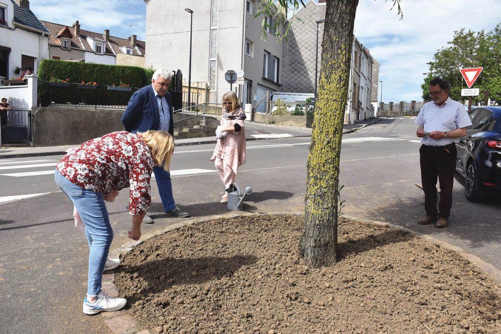 Adopte un arbre